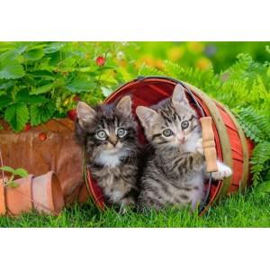 Katjes op Ontdekkingsreis